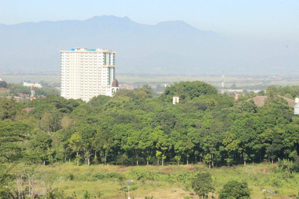 Hutan Mahoni Kampus ITB Jatinangor, disamping Apartemen Pinewood Jatinangor